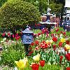 Cape May Gardens and Flowers