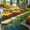 Fall Flower Show