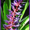 Southwest Bromeliad Guild Show & Sale