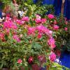 Wilmington Garden Show