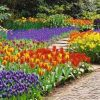Plant Bulbs Now for Next Spring
