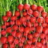 Quick Crops for Veggie Gardeners