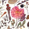 Inspiring Kew