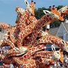 The Flower Parade in Zundert