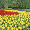 Tulip Cruise in the Netherlands and Belgium