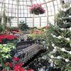 Winter Flower and Train Show