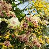 Alluring Orchids at Kew Gardens