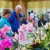 Illinois Orchid Society Show