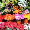 Akron Home and Flower Show