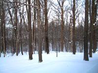 eaglecreek_winter1