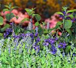 pennsylvania_philadelphia_flowershow
