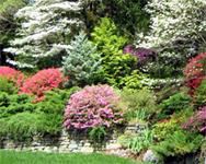 Hillwood Estate Gardens