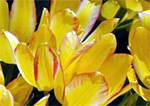 ohio_cincinnati_flowershow