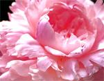 canada_ontario_toronto_blooms