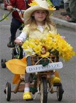 massachusetts_nantucket_daffodil2