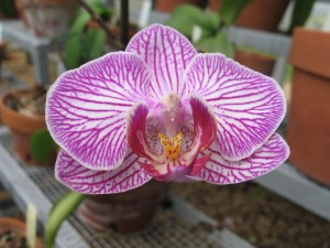 Orchid Spectacular