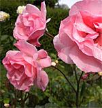 2021's Most Romantic Gardens in the U.S.
